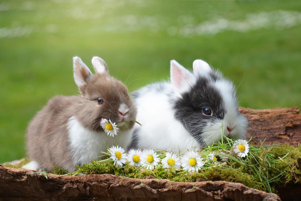 Frohe Ostern wünscht HYPOXI