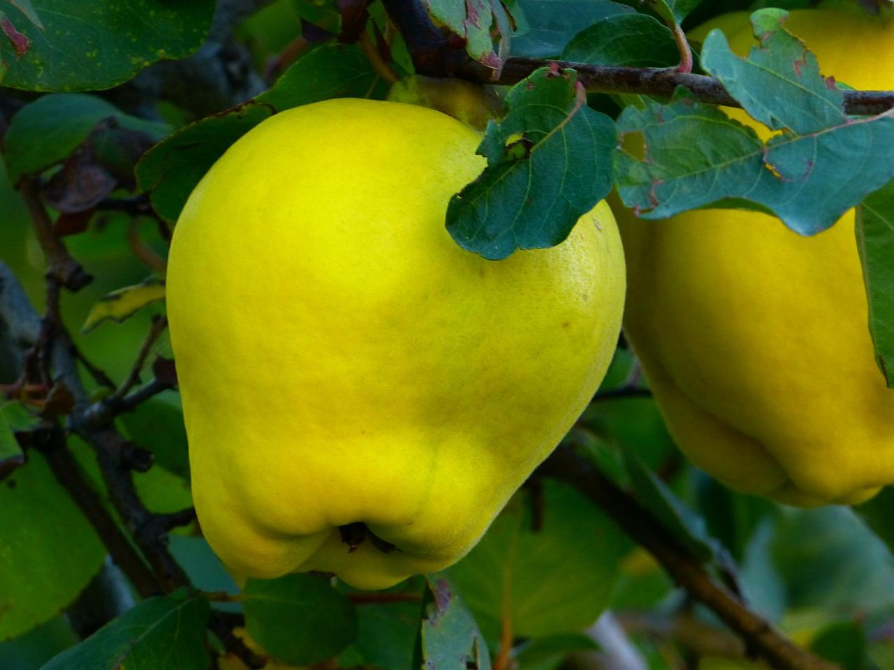 Saisonale Ernährung ist auch bei Lipödem empfohlen